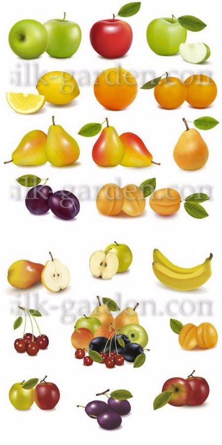 мультяшные овощи и фрукты картинки