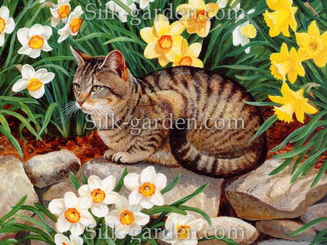 Cate cat